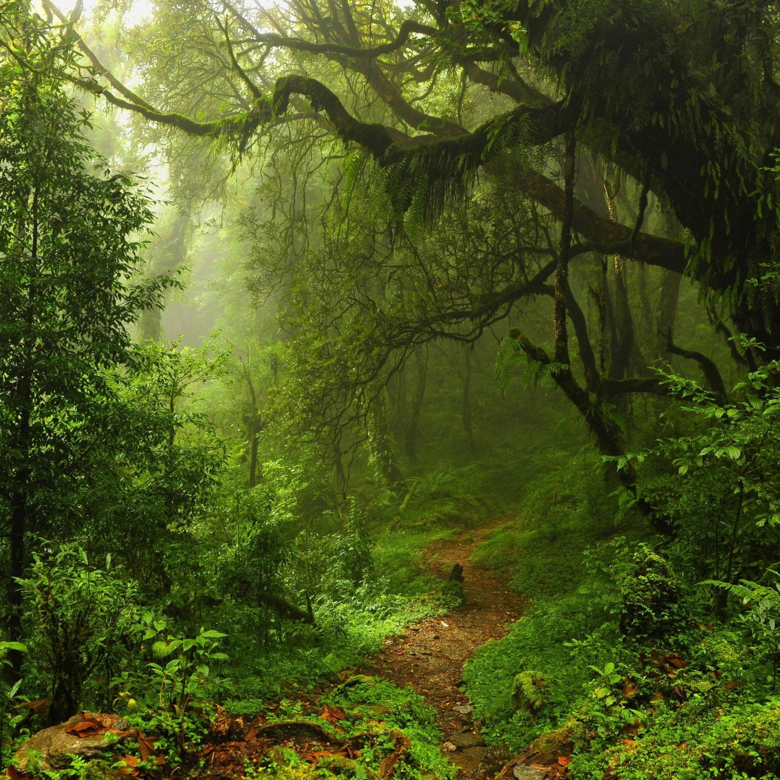 Wide Forest